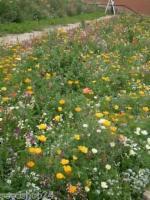 1 kg niedrige Blumenwiese