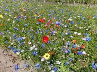 100-150 m² Blumenwiese