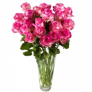 miflora rosen guenstig kaufen