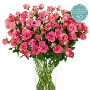miflora rosenrallye rosen guenstig kaufen 3