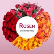 rosenueberraschung2