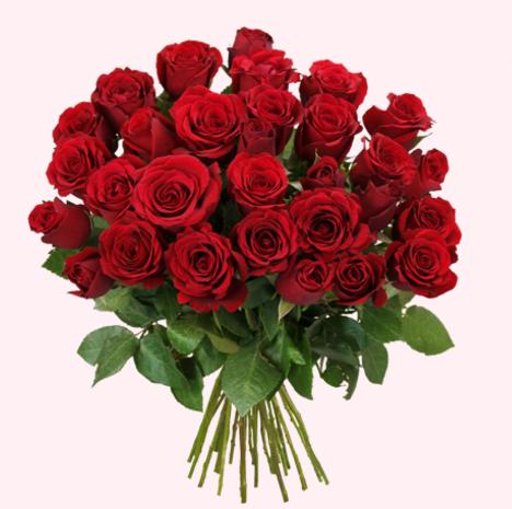 44 rote rosen 50cm l nge f r 25 94 bei blume ideal. Black Bedroom Furniture Sets. Home Design Ideas