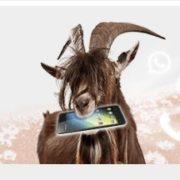 *TIPP* klarmobil Smartphone Flat 1000 (100 Frei-Minuten + 1 GB) für 2,99€/Monat