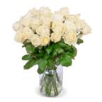 blume-ideal-weisse-premium-rosen