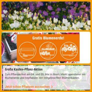 offline diesen fr sa obi pflanzenfest balkonkasten mitbringen pflanzen kaufen gratis. Black Bedroom Furniture Sets. Home Design Ideas